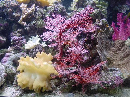 Kula Eco Park : Kula Marine Display