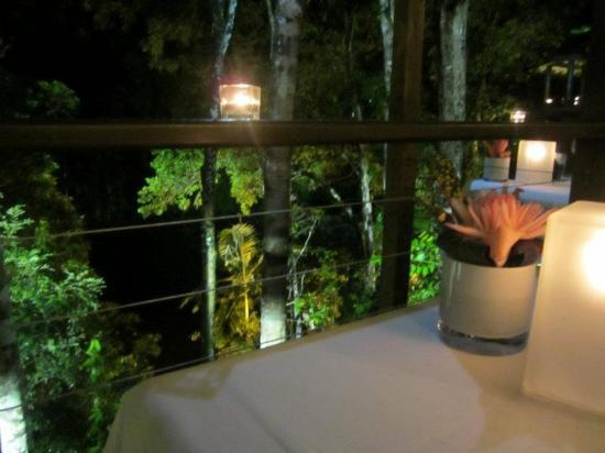 Silky Oaks Lodge: View from our table looking out into the rainforest