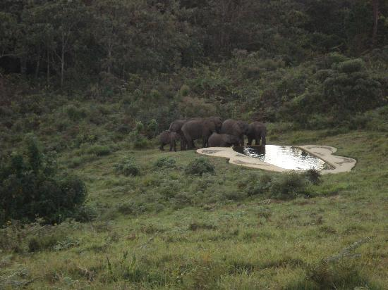 Castle Forest Lodge: olifanten bij het zwembad