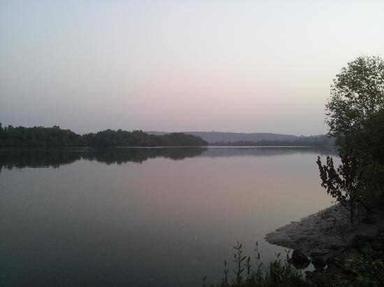 Salim Ali Bird Sanctuary: The River