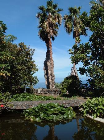 Jardín Acuático: Jardin Acuatico Risco Bello