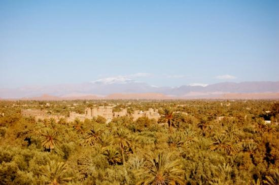 Kasbah Ait Ben Moro: View of the oasis from the roof.