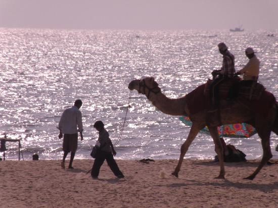Malpe Beach: Camel Riding
