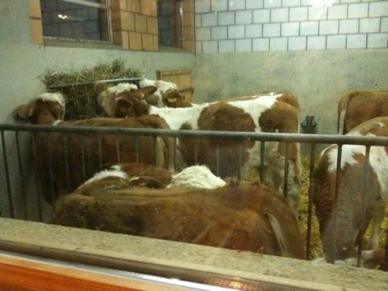 Michel's Stallbeizli: Yup, them thar is cows!