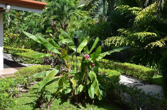 Hotel Pumilio: Garten