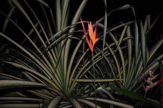 Hotel Pumilio: Nachtaufnahme