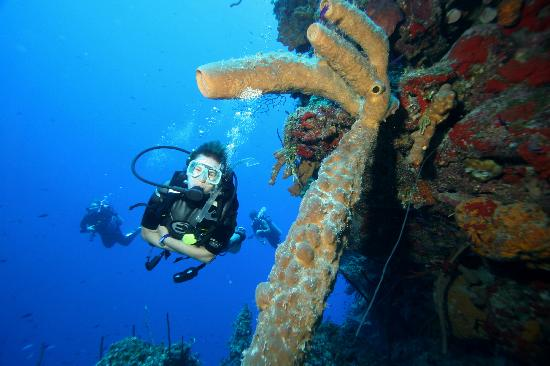 The Club at Little Cayman: World Class Diving