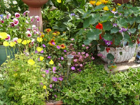 Plasnewydd Bed and Breakfast: Our award winning garden