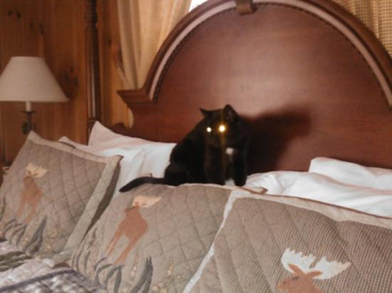Christmas Farm Inn & Spa: even the cats felt at home