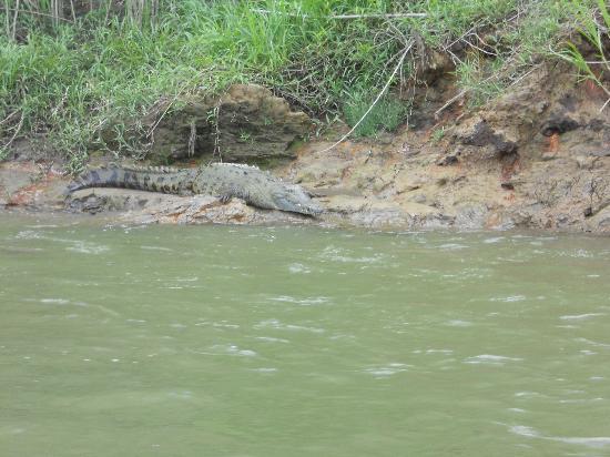 Costa Rica In Tours : on Sarapiqui River