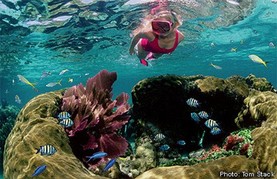 Sundiver Snorkeling Tours (Key Largo, FL): Hours, Address