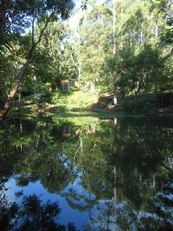 Kondalilla Eco Resort: lake at treehouses of montvill