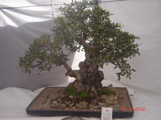 Garden of Five Senses: Unique collection of bonsai