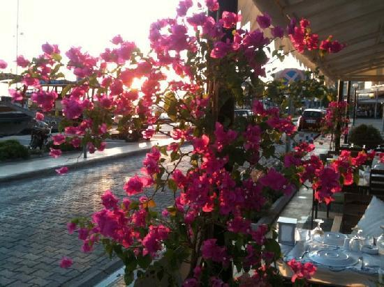 Giritli Restaurant: Sunset within flowers