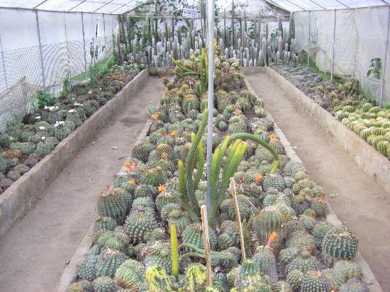 Kalimpong Cactus Nursery