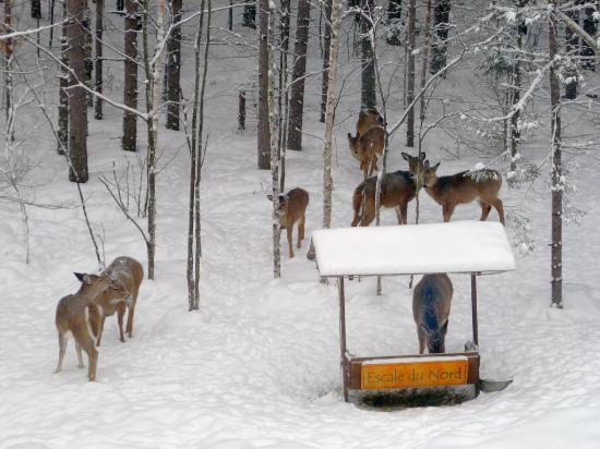 Gite l'Escale du Nord: Deer