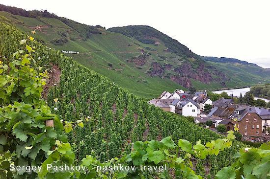 Weinhaus Moselschaenke: виноградники Мозеля