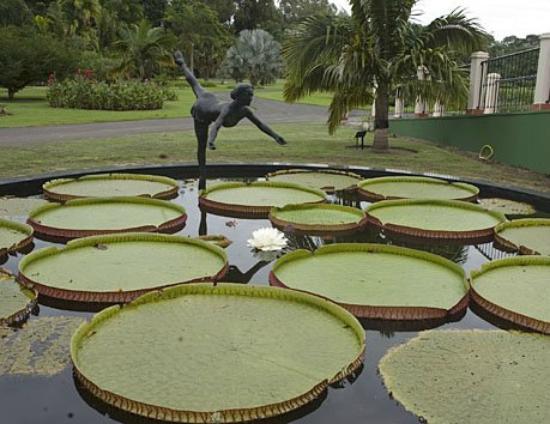 Jardim Botanico Plantarum, Nova Odessa
