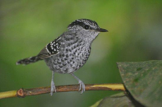 Rio Itatiaia Birds & Tours