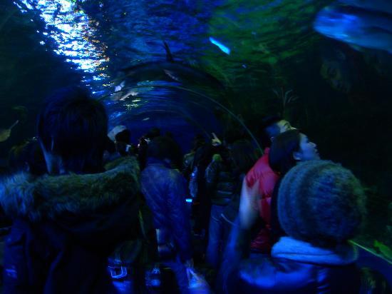Shinagawa Aquarium: しながわ水族館アクア