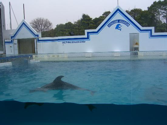 Shinagawa Aquarium: しながわ水族館ドルフィン