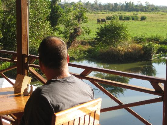 Kingfisher Ecolodge: our view for breakfast!