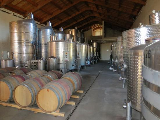 Vina Casa Marin Winery: Inox and Barrels
