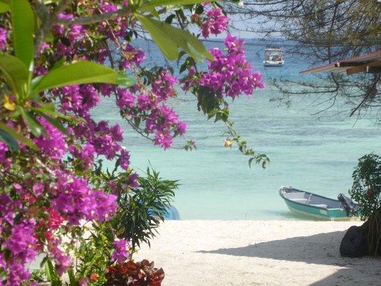 Fauna Beach Chalet: View from a Garden View Room