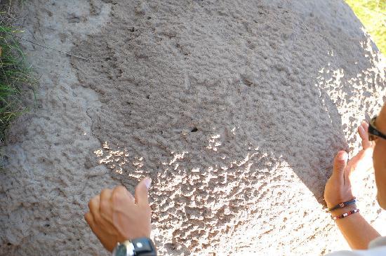 كيشاكا لكشري جيم لودج: Termitebreakfast