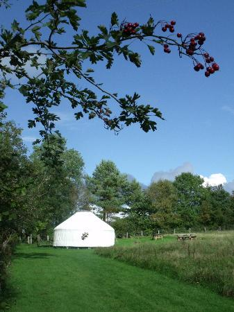Denmark Farm Conservation Centre: Denmark Farm Eco Campsite with yurt
