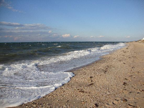 Arbor View House Bed & Breakfast: Orient Point Beach
