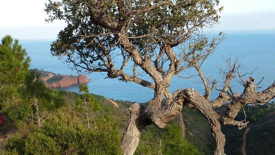 Chambre d'hotes La Potiniere: vue nature