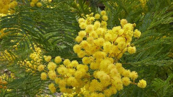 Chambre d'hotes La Potiniere: mimosa