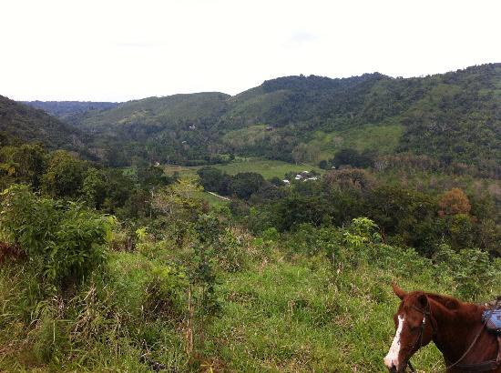 Mountain Equestrian Trails: View from a horse