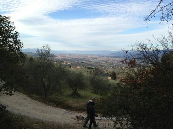 The Truffle Hunter: gorgeous views