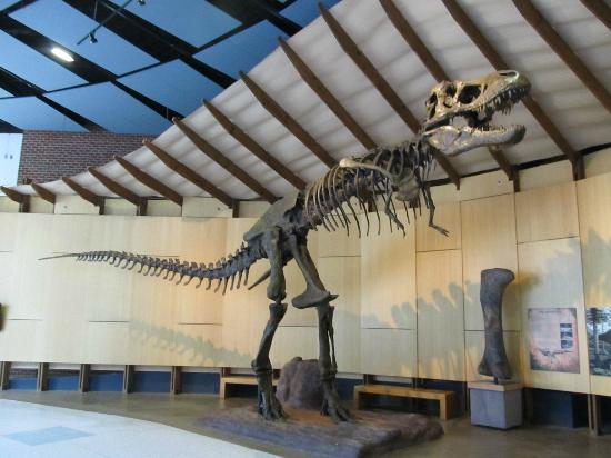 The Schiele Museum of Natural History: T Rex Skeleton