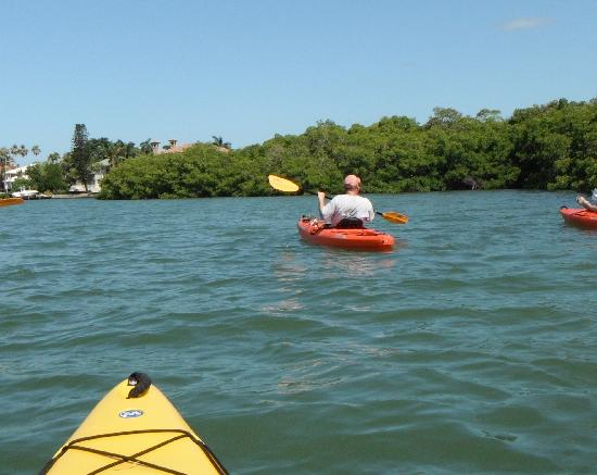 Sea Life Kayak Adventures: Calm protected waters