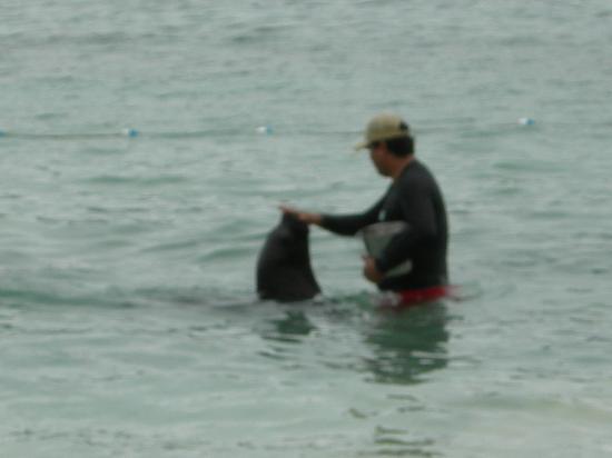 Cayo Levantado (Bacardi Island) : sea otter at bacardi island
