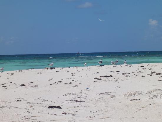 Playa Paraiso: uccelli in paraiso