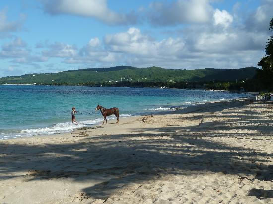 Cottages By The Sea: Lots of horses on the beach in the morning