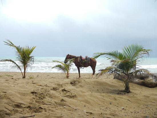 Hotel Celuisma Cabarete: horseback riding offered