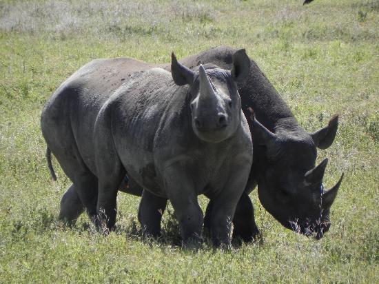 Ngorongoro Crater: Rhino