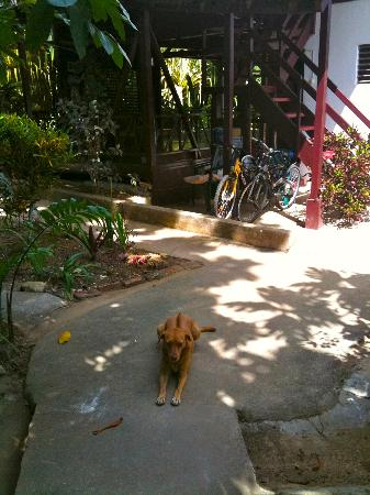 Negril Yoga Centre : Yoga Center guard dog!