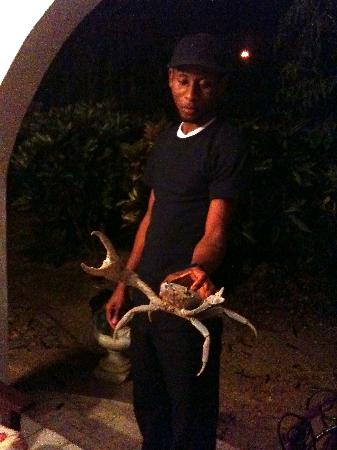 Negril Yoga Centre : Security guard Kenroy found this crab outside our room!