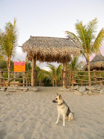 Buena Onda Beach Resort: Guard Dog Bloozie.