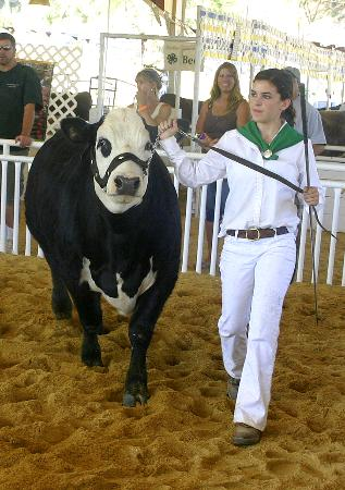 El Dorado Fairgrounds: 4H Beef