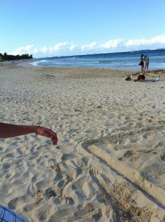 Oceana Hostal Playero: The beach near the hotel