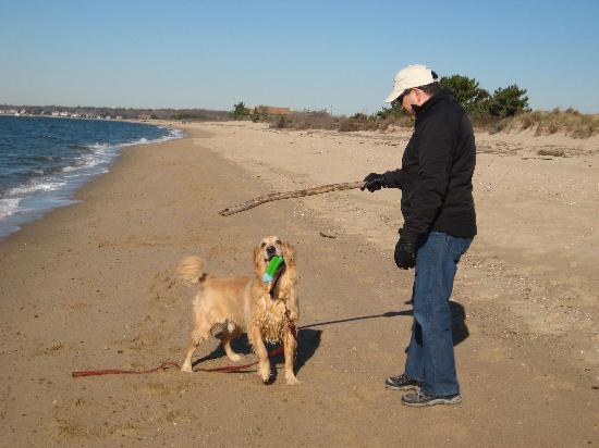 Hammonasset Beach State Park: Dog momentarily not under control :)