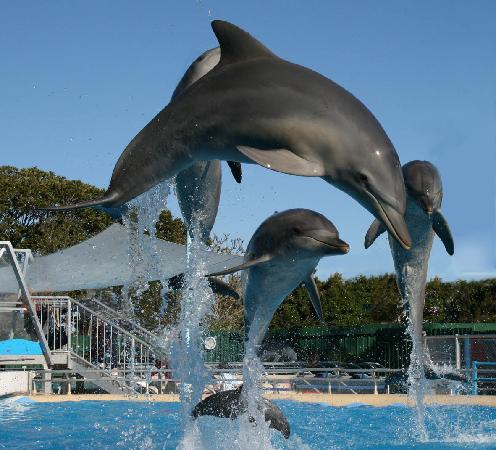 Coffs Harbour, Australia: Marine Magic - Leaping dolphins