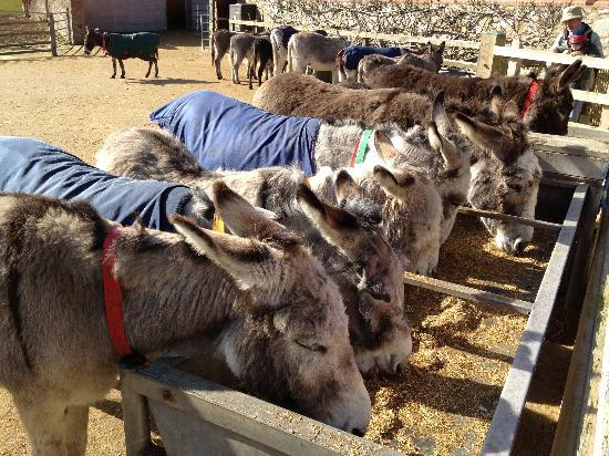 The Donkey Sanctuary: Donkey-tastic!